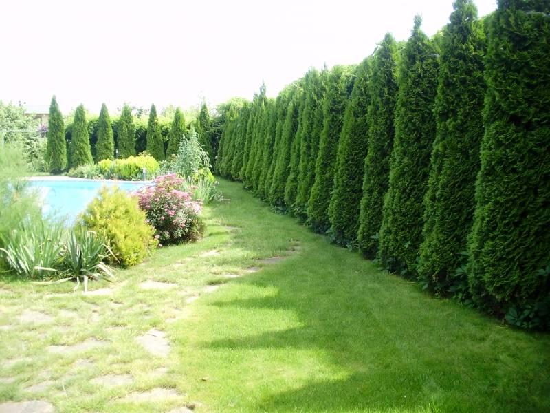 Какие кустарники и деревья можно сажать летом 62